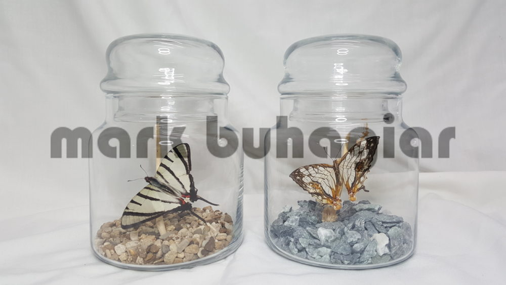 Buttefly Domes Jars And Vases Mark Buhagiar Taxidermy